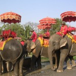 AyuthayaElephantCamp1