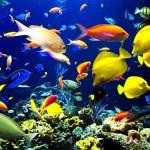 UnderwaterWorldPattaya7