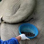 Thailand Elephant Coffee